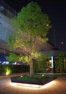 090523tree_2